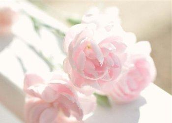 розовая свадьба это сколько лет